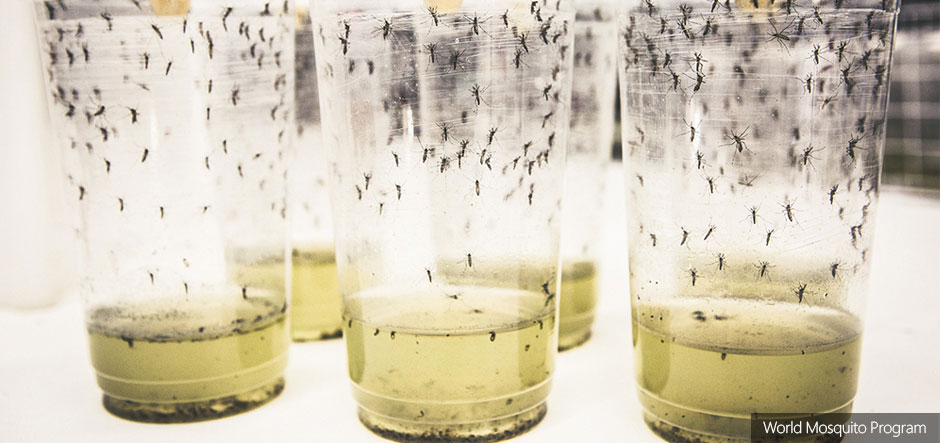Microsoft funds initiative to fight mosquito-borne diseases