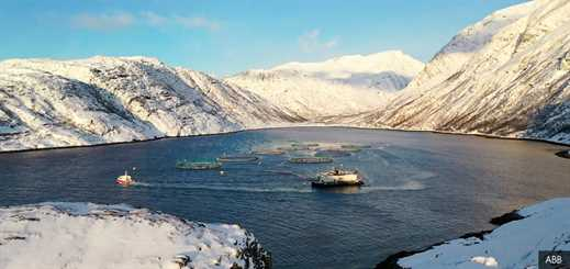 Norway Royal Salmon improves sustainability with AI